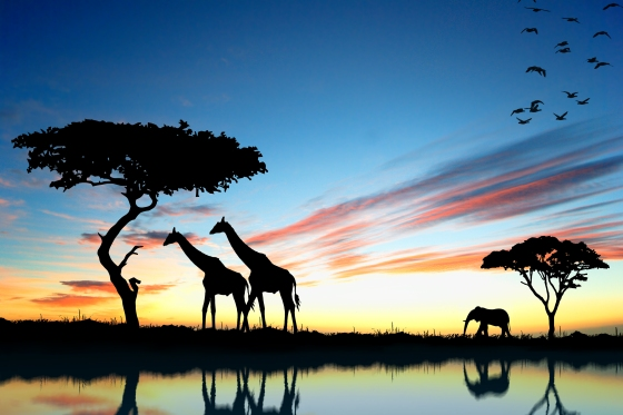 safari-c3a1frica